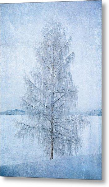 December Birch Metal Print