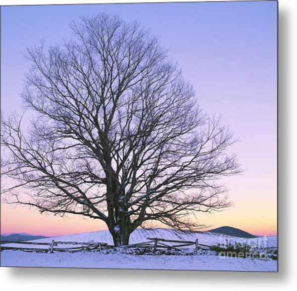 December Twilight Metal Print