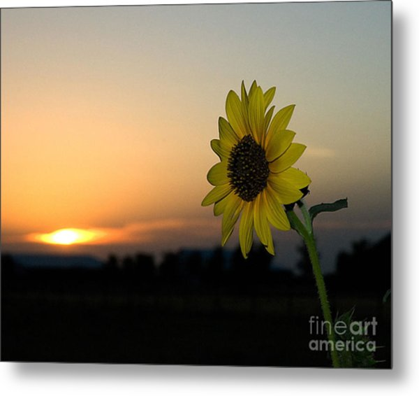 Metal Print featuring the photograph Sunflower And Sunset by Mae Wertz