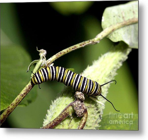 Deep In The Green - A Caterpillars Life Metal Print