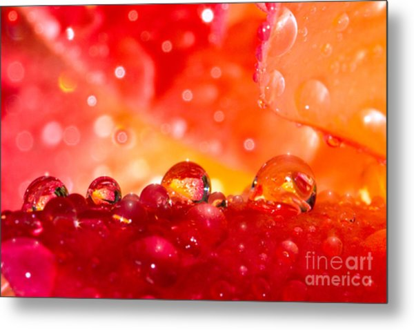 Deep Within A Rose Metal Print