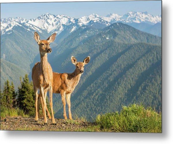 Deer And Mountains Metal Print by Kencanning