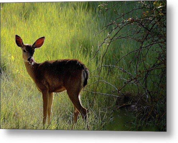 Deer At Home Away From Home Metal Print