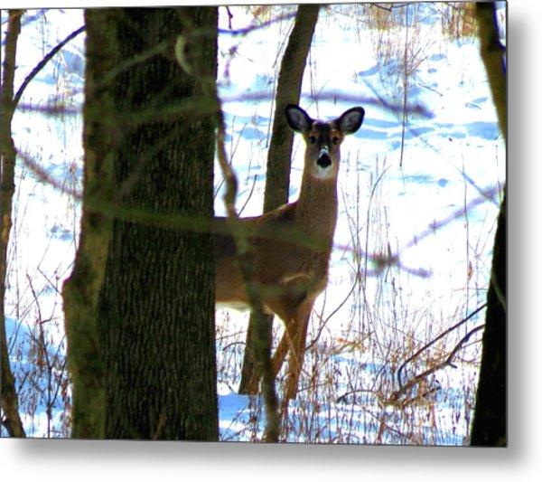 Deer At Park Metal Print