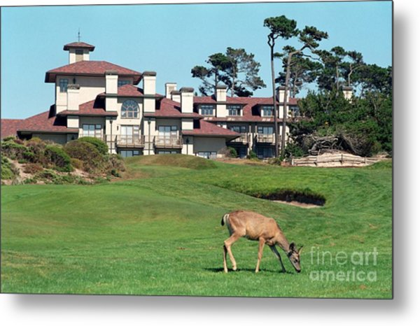 Deer At Spanish Bay Metal Print