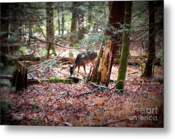 Deer Grazing Metal Print