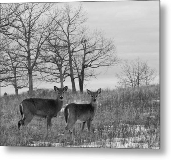 Deer In Meadow Metal Print