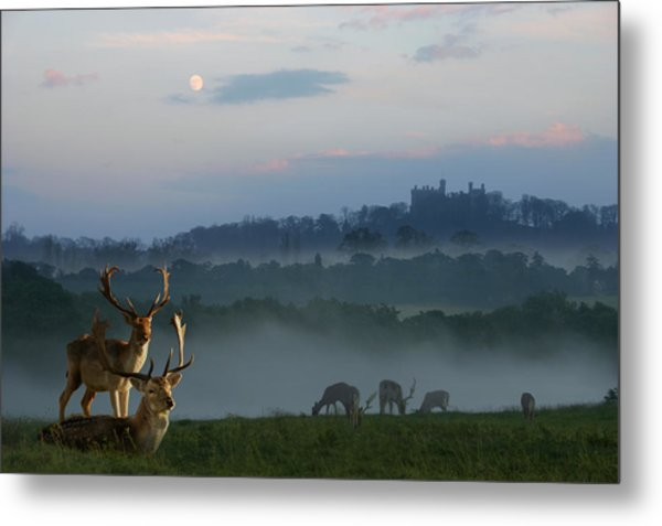 Deer In The Mist Metal Print