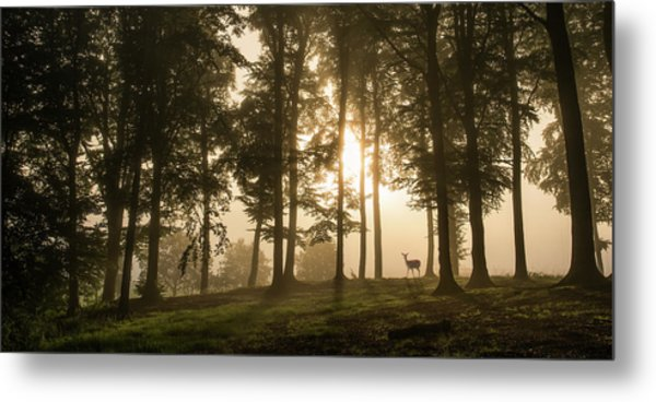 Deer In The Morning Mist. Metal Print