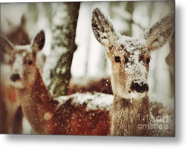 Deer In The Snow Metal Print
