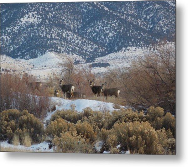 Deer In Winter Metal Print