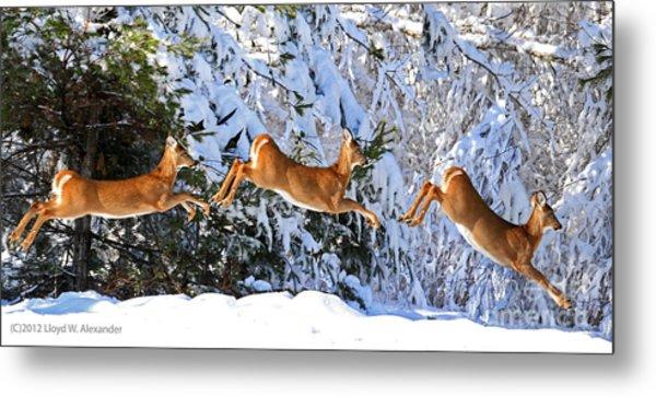 Deer Jump Metal Print