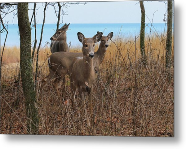 Deer On The Beach Metal Print by Anna-Lee Cappaert