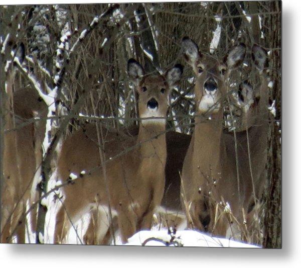 Deer Posing For Picture Metal Print