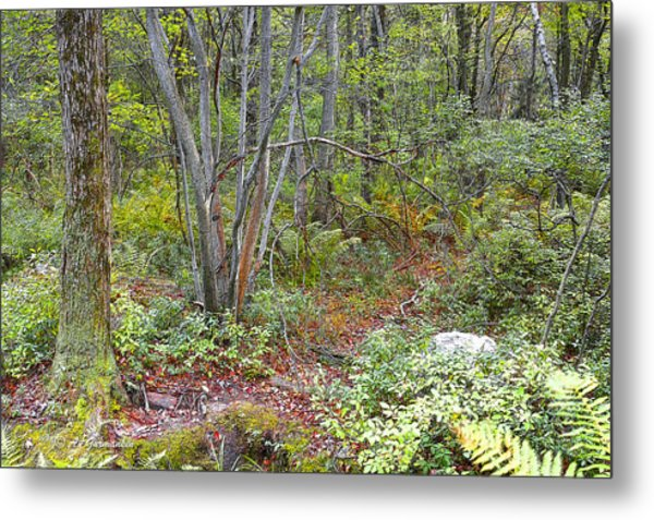Deer Trail Early Autumn Pocono Mountains Pennsylvania Metal Print