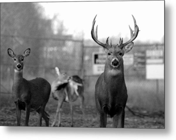 Deer Trio Metal Print
