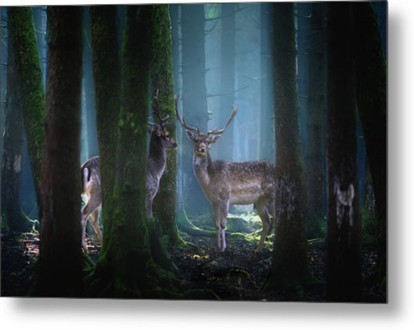 Deers Metal Print by Patrick Aurednik