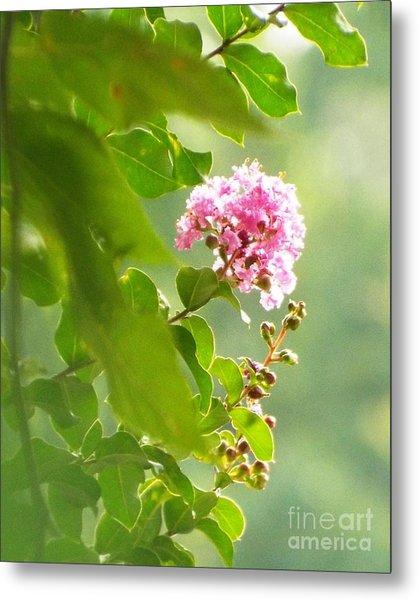 Delicate Blossom Metal Print