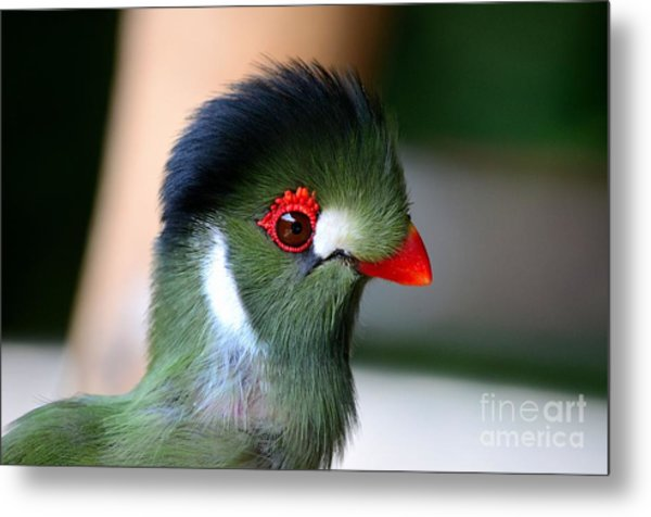 Delicate Green Turaco Bird With Red Beak White Patches And Black Crown Metal Print