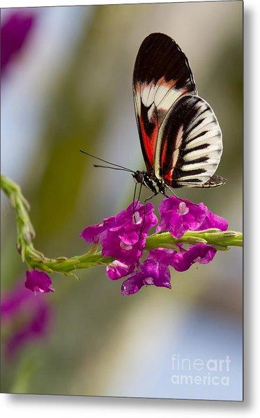 delicate Piano Key Butterfly Metal Print
