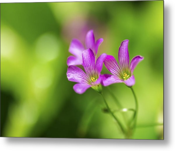 Delicate Purple Wildflowers Metal Print