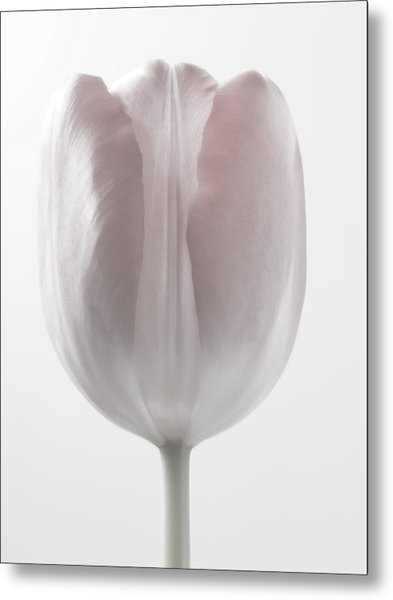 Close Up White Flowers Macro Photography Art Metal Print