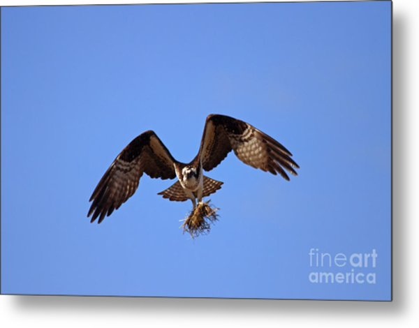 Delivery By Air Metal Print