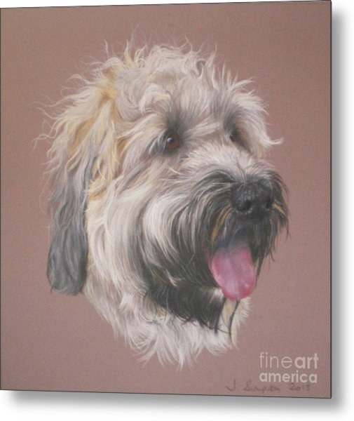 Dennis - Wheaten Terrier Metal Print by Joanne Simpson