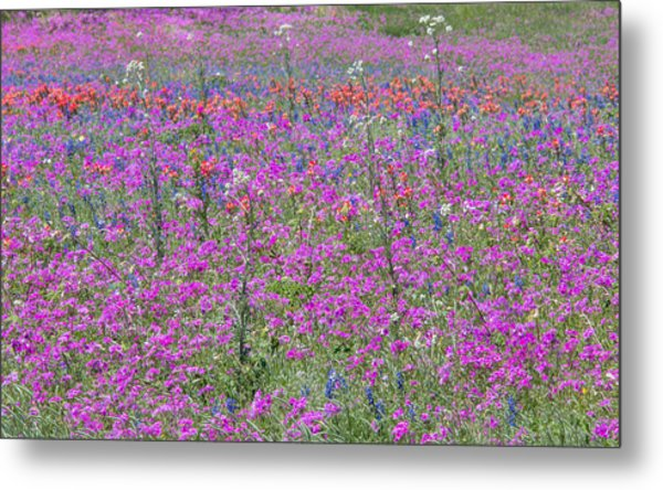 Dense Phlox And Other Wildflowers Metal Print