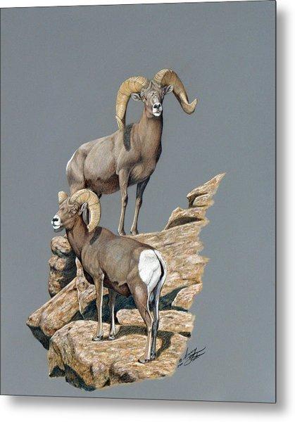 Desert Bighorn Rams Metal Print