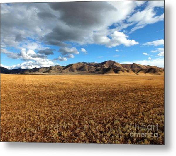 Desert Bliss Metal Print by Kimberly Maiden