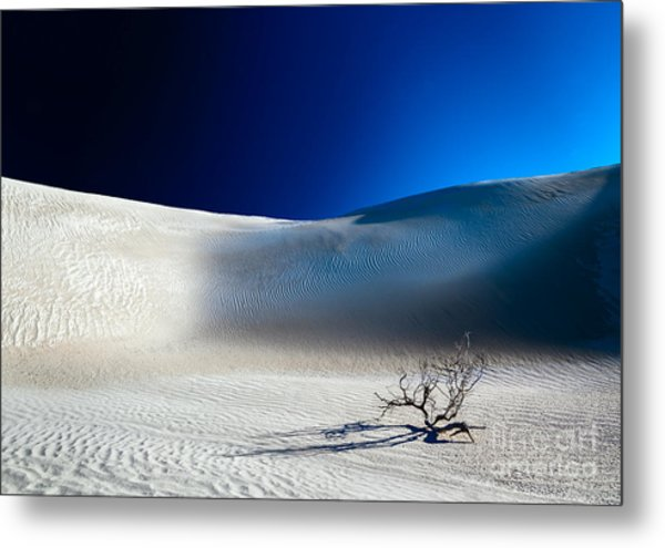 Desert Branch Void Metal Print