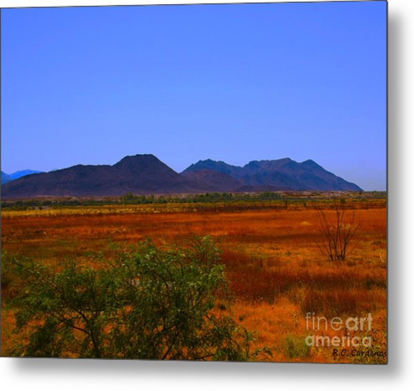 Desert Field Metal Print by Rebecca Christine Cardenas