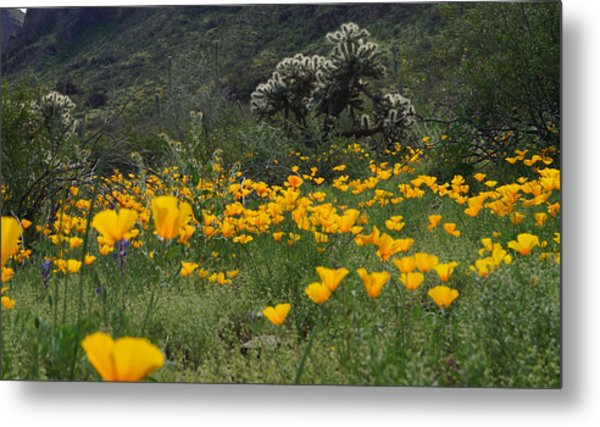 Metal Print featuring the photograph Desert Spring by Broderick Delaney