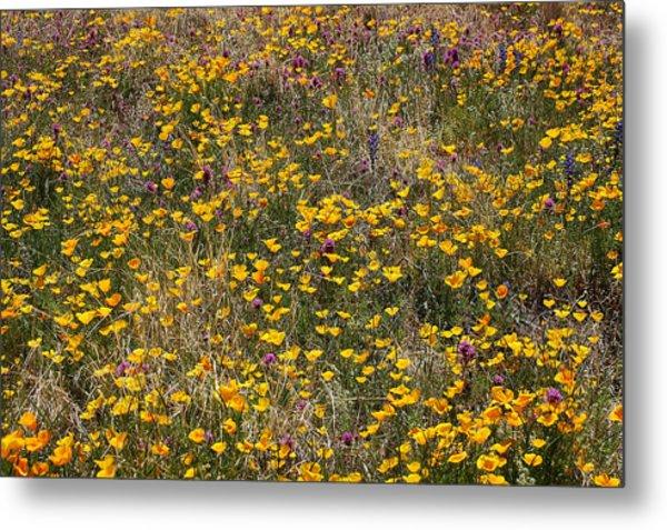 Desert Wildflowers Metal Print by Robert Ashbaugh