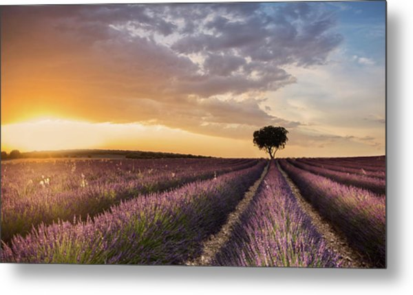 Destination Lavender Metal Print by Fran Ros