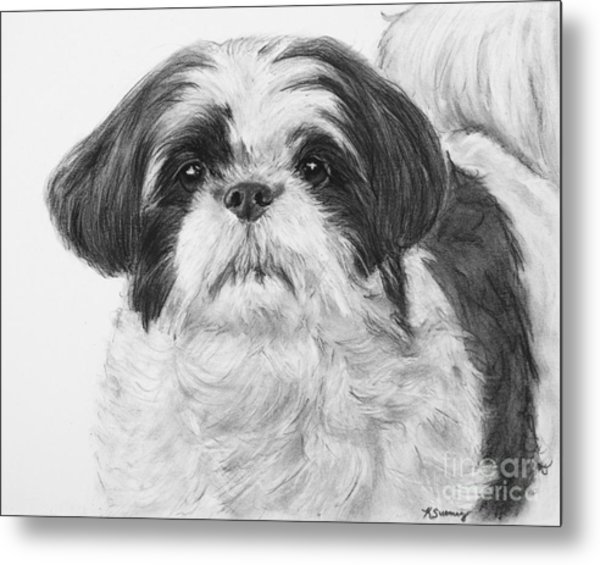 Detailed Shih Tzu Portrait Metal Print