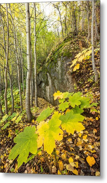 Metal Print featuring the photograph Devil's Club In Autumn by Tim Newton