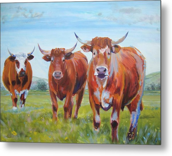 Devon Cattle Metal Print