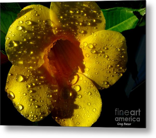 Dew Trumpet Metal Print by Greg Patzer