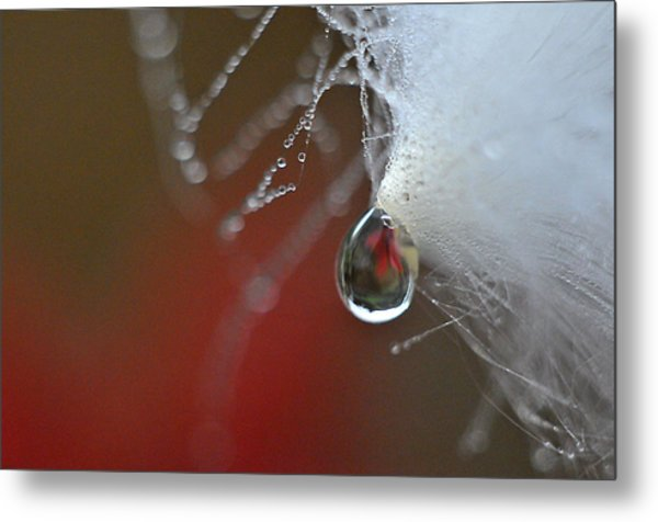 Dewdrop Lily On Milkweed Silk Metal Print