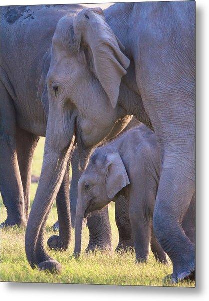 Dhikala Elephants Metal Print