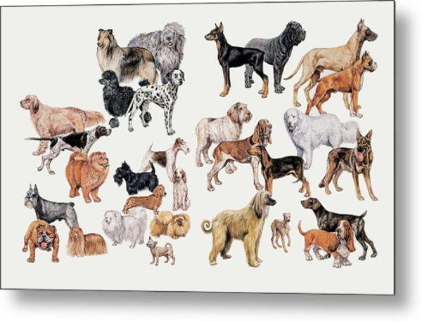 Different Breeds Of Dogs Metal Print by Deagostini/uig/science Photo Library