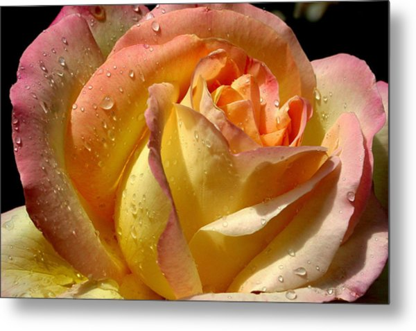 Different Hues Metal Print