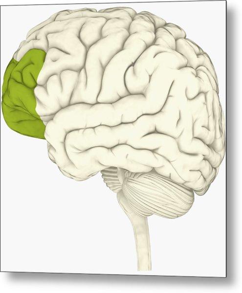 Under The Cortex Diagram