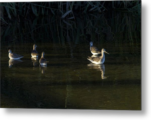 Digital Oil Of Sandpipers Metal Print
