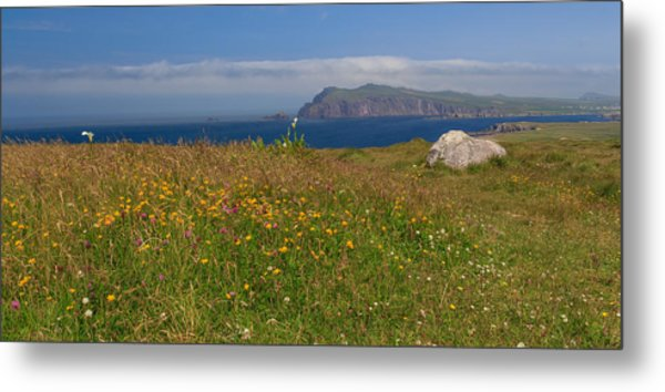 Dingle Wildflowers Metal Print