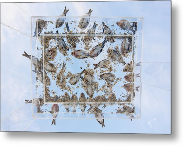 Dining In The Sky Metal Print