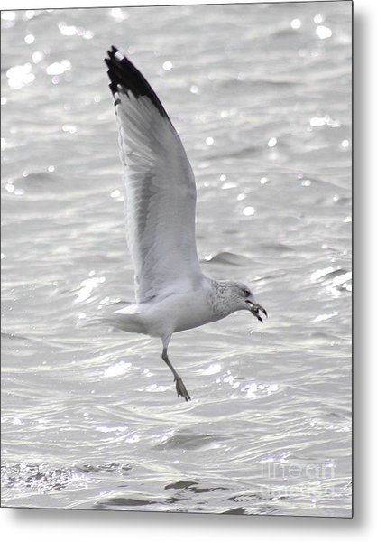 Dining Seagull Metal Print