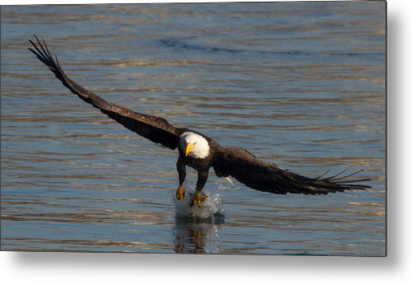 Dinner On The Wing  Metal Print by Glenn Lawrence